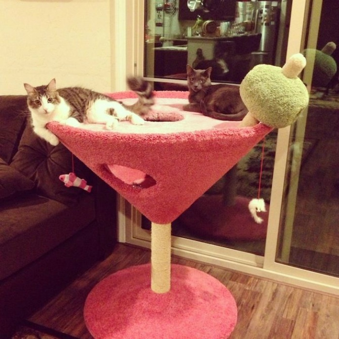 Rascadores originales gatos martini