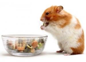 hamsters evitar que muerdan su jaula