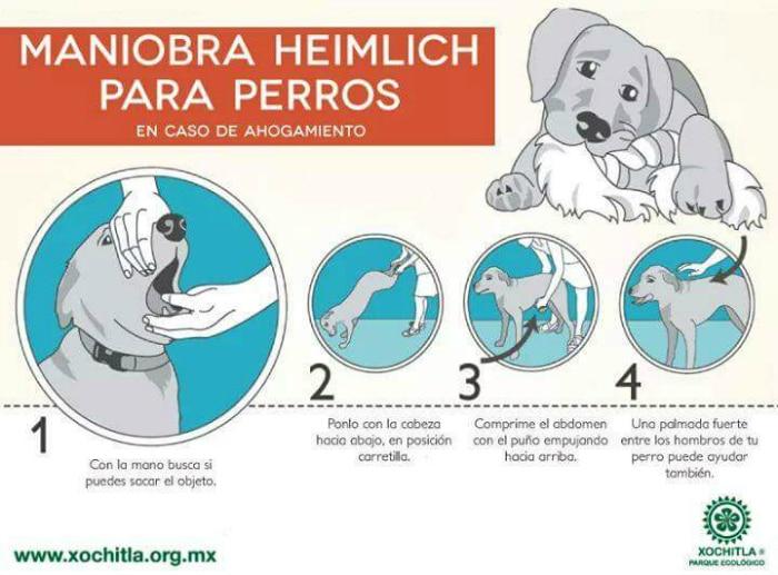 Cómo actuar en atragantamiento perros