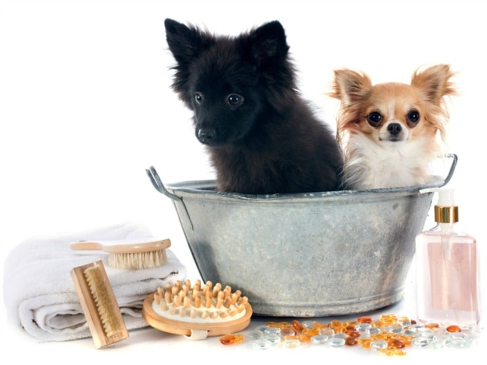 pasos para lavar a un perro