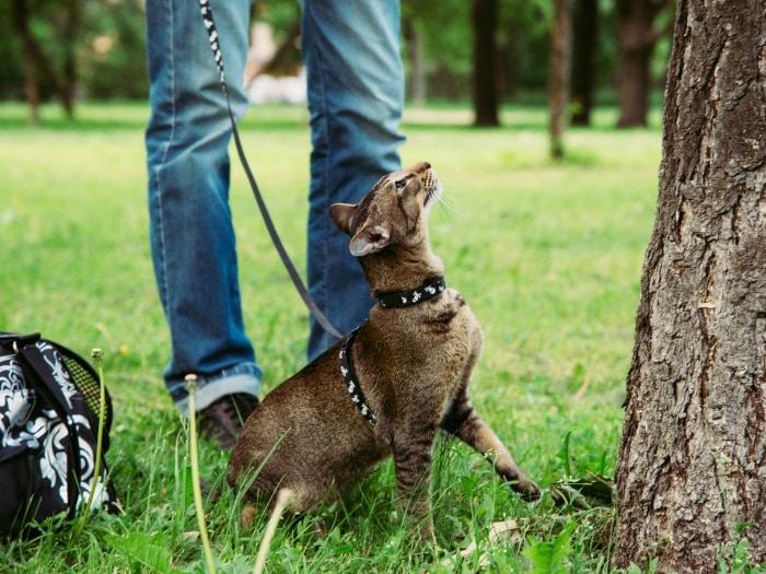 hacer feliz a un gato consejos