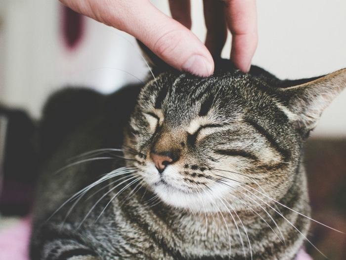 Día Internacional del Gato: 20 curiosidades sobre ellos