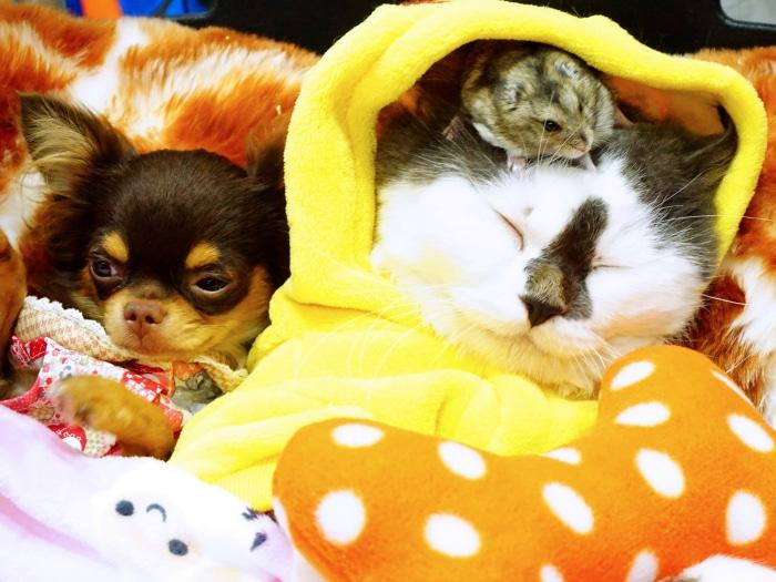Enfermedades transmiten mascotas