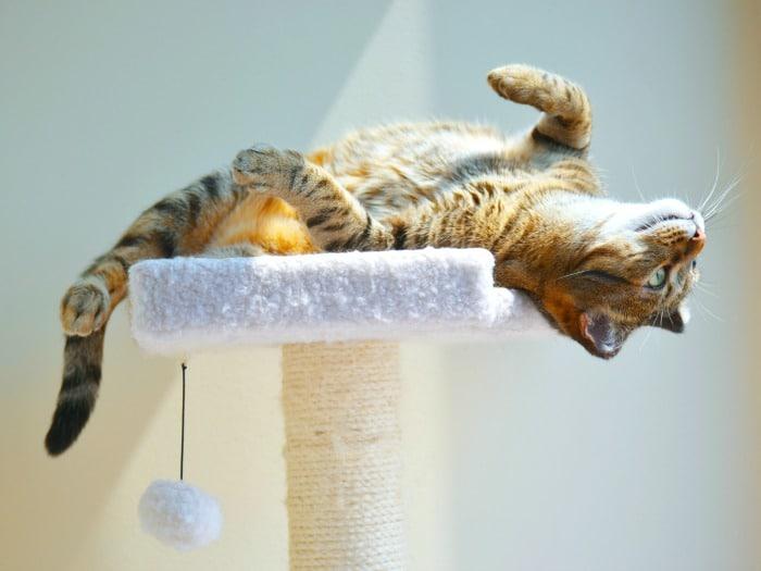 Haz feliz a tu gato casero