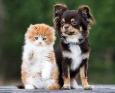 Enfermedades mascotas