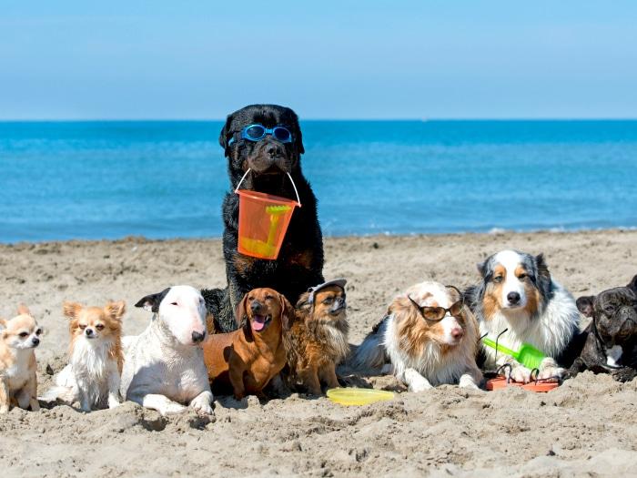 Playas para perros España