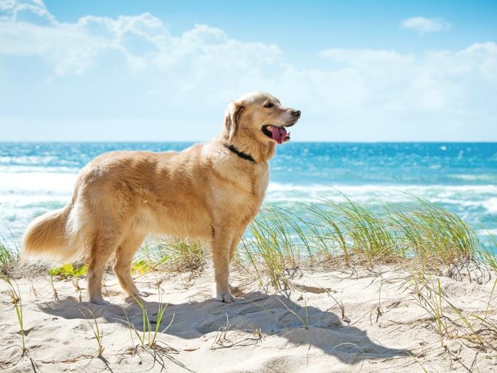 Playas para perros en España 2017