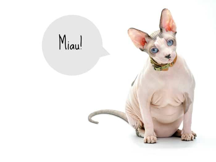 Gatos esfinge y gatos sin pelo