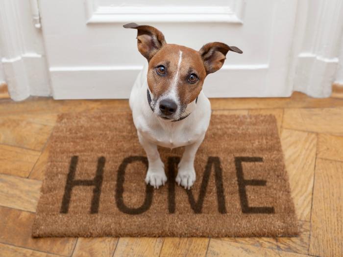 Vigilar perro o gato en casa