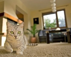 Vigilar mascotas si nos vamos de casa