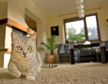 Cómo vigilar a tu mascota cuando no estás en casa