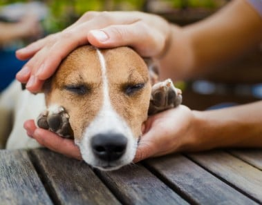 ¿Qué hago si mi perro se ha envenenado o intoxicado?