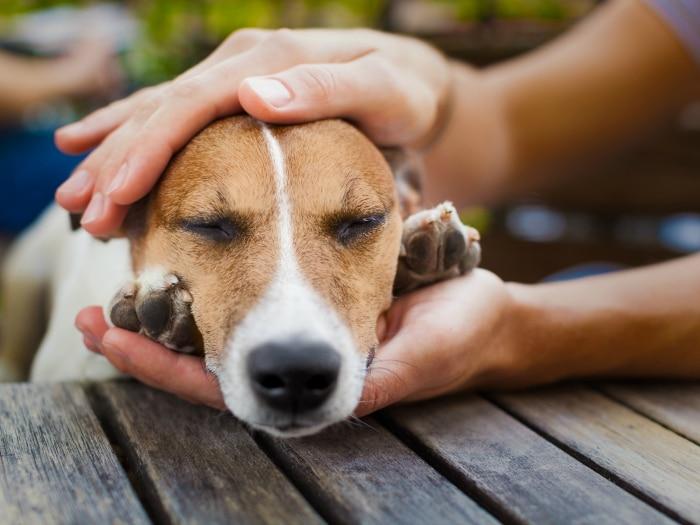 Cómo actuar frente al envenenamiento de perros