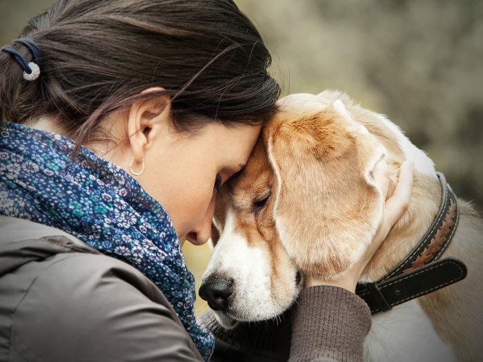 remedios perros envenenados
