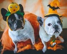Halloween mascotas