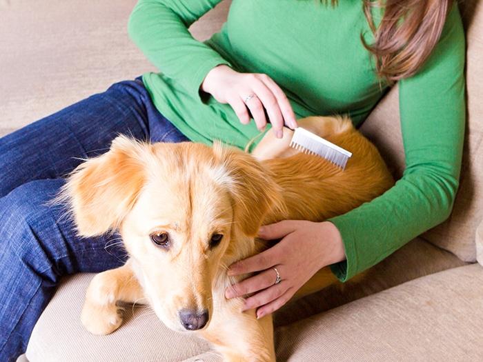 Calvas pelaje de perro