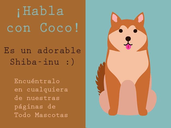 Chatbot Coco Todo Mascotas Shiba inu