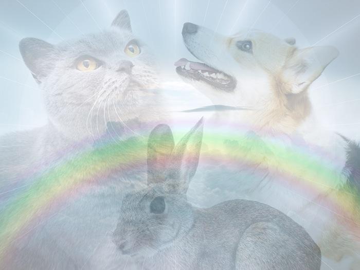 puente arcoiris mascotas