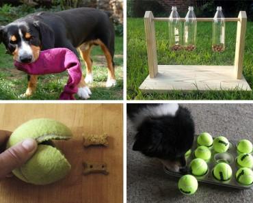 Puzzles y juguetes caseros para perros