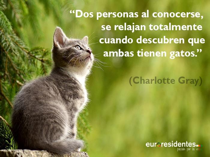 Frases De Gatos Muy Originales Interesantes Y Divertidas