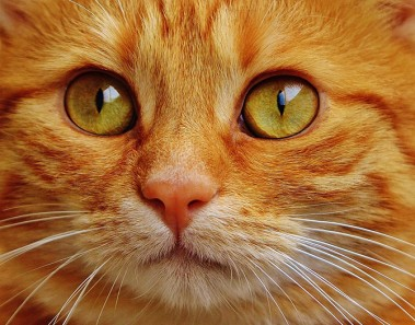 frases de gatos