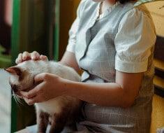 parasitos lombrices gatos