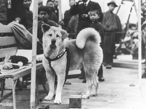 Hachiko: La historia del perro más fiel