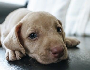 cada cuanto hacer chequeo perros