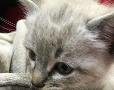 Vídeos de gatos bonitos