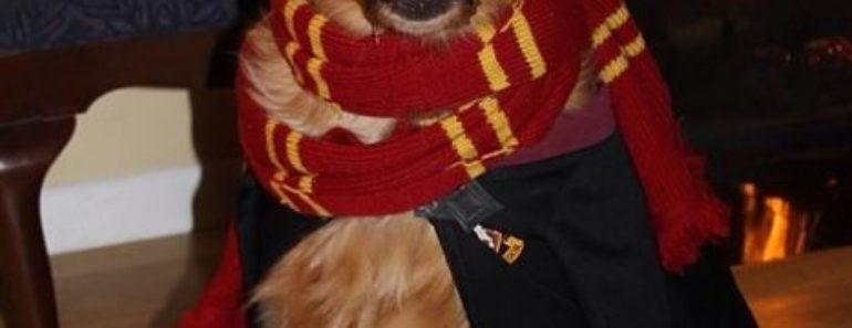 Perro disfrazado de Harry Potter