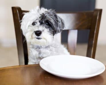 10 comportamientos problemáticos en perros y cómo evitarlos