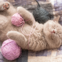 Día Internacional del Gato: 20 de Febrero