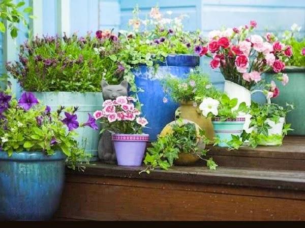8 trucos de oro y baratos para incrementar el valor de for Como aprender jardineria