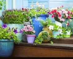 a-plantas-jardineria1