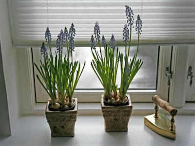 Hogar con plantas purificadoras