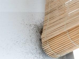 Cómo quitar manchas de moho y humedad