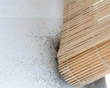 Bricolaje alba iler a archivos trucos de bricolaje Moho en la pared