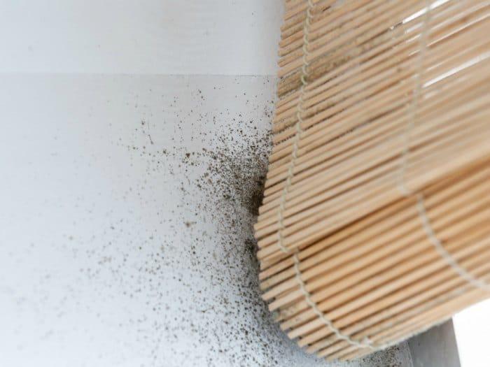 C mo quitar manchas de humedad y moho en la pared trucos de bricolaje - Quitar humedad pared ...