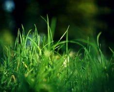 Cómo hacer crecer el césped en la sombra