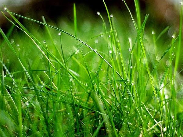 C mo sembrar el c sped en la sombra trucos de bricolaje - Como plantar cesped en el jardin ...
