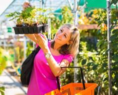 comprar-plantas-interior-consejos