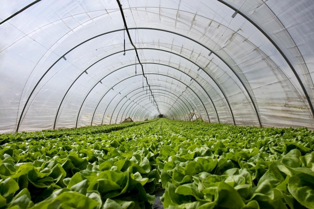 5 consejos para comprar las mejores plantas de interior - Comprar plantas de interior ...