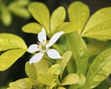 Seis plantas fáciles de cultivar para plantar este verano