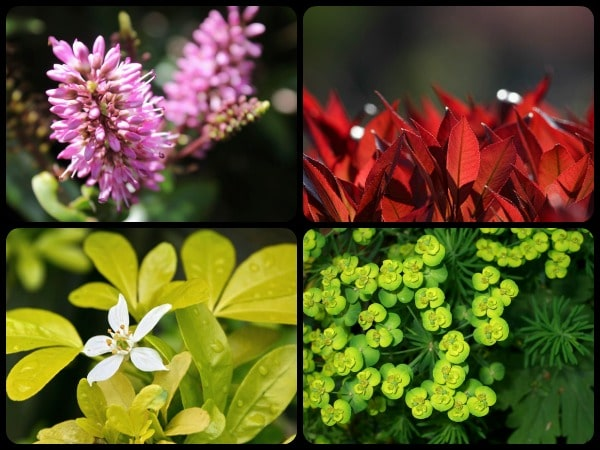 Plantas de verano beautiful plantas de invierno para - Calibrachoa perenne ...