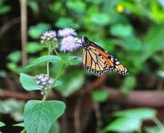 mariposa_jardin