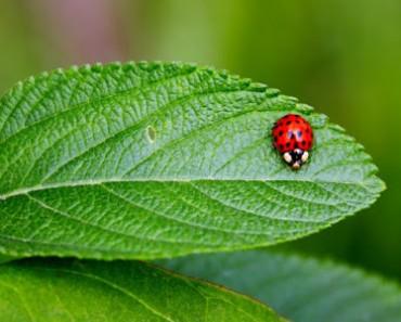 Cómo proteger nuestro jardín de insectos durante todo el año