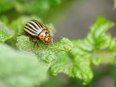 Cómo proteger tu jardín de las plagas