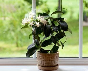 Plantas que te ayudarán a dormir mejor y puedes tener en el dormitorio
