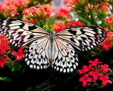 Cómo atraer mariposas a nuestro jardín