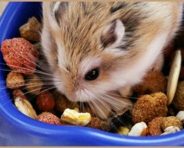 ¿Cómo alimento a mi hamster?